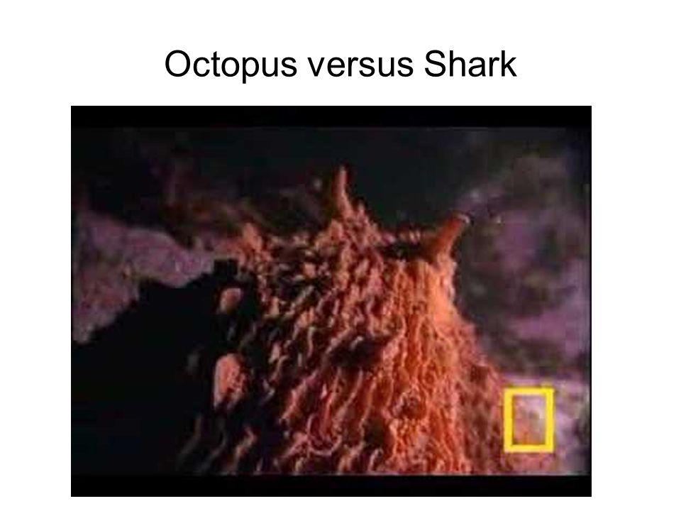 Octopus versus Shark
