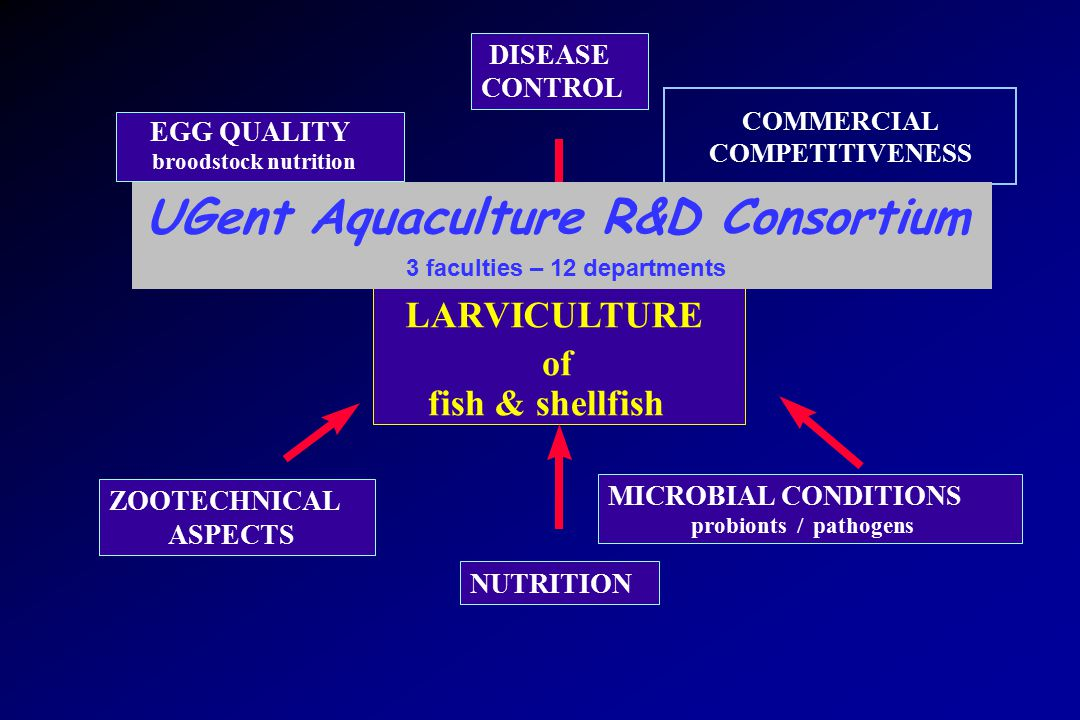 LARVICULTURE of fish & shellfish DISEASE CONTROL NUTRITION EGG QUALITY broodstock nutrition ZOOTECHNICAL ASPECTS MICROBIAL CONDITIONS probionts / pathogens COMMERCIAL COMPETITIVENESS UGent Aquaculture R&D Consortium 3 faculties – 12 departments