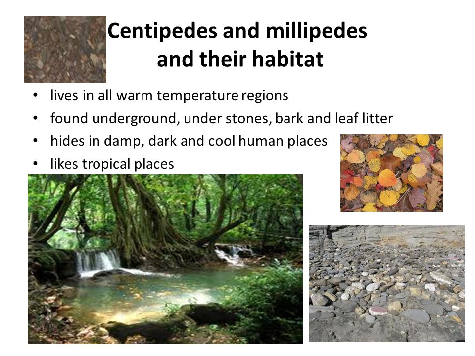 What do centipedes and millipedes look like.