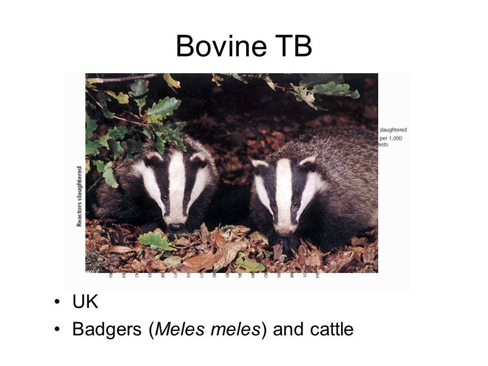 Bovine TB UK Badgers (Meles meles) and cattle