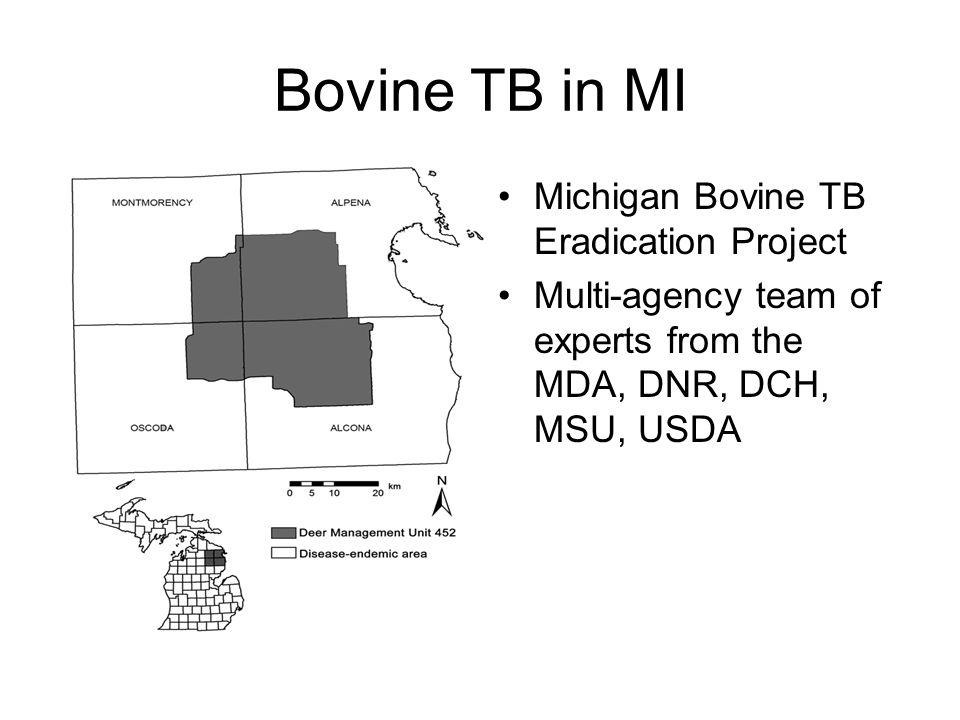 Bovine TB in MI Michigan Bovine TB Eradication Project Multi-agency team of experts from the MDA, DNR, DCH, MSU, USDA