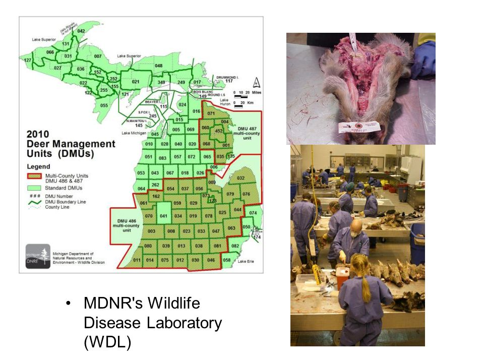 MDNR s Wildlife Disease Laboratory (WDL)