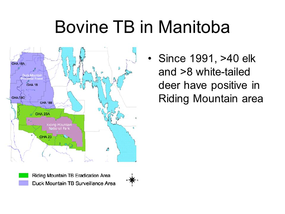 Bovine TB in Manitoba Since 1991, >40 elk and >8 white-tailed deer have positive in Riding Mountain area