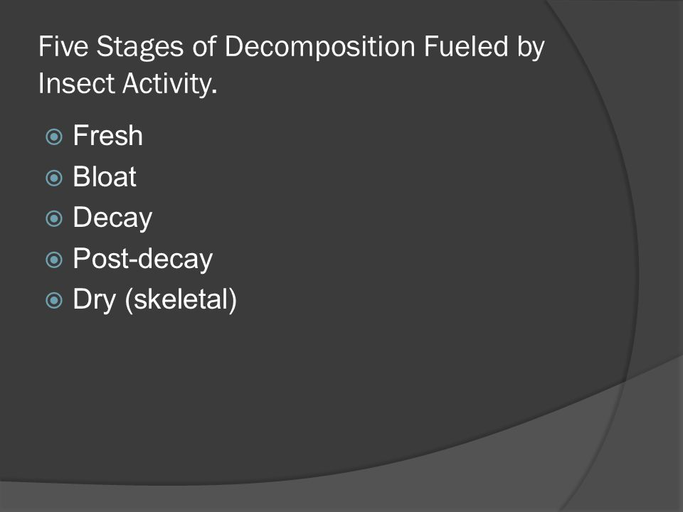 Five Stages of Decomposition Fueled by Insect Activity.