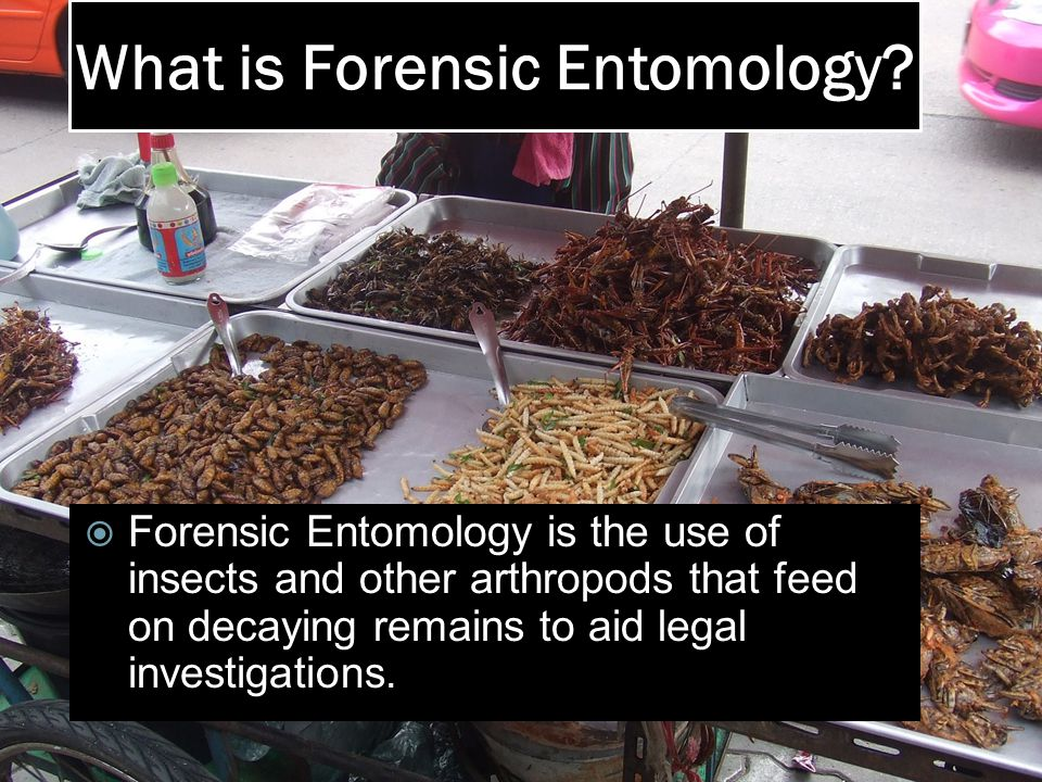 What is Forensic Entomology.