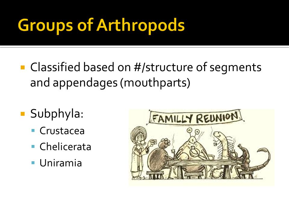  Classified based on #/structure of segments and appendages (mouthparts)  Subphyla:  Crustacea  Chelicerata  Uniramia
