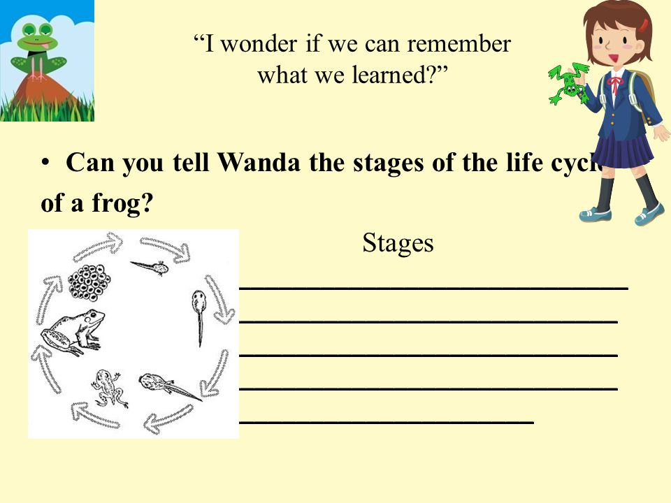 What about a butterfly? Can you help Wanda label the life cycle of a butterfly.