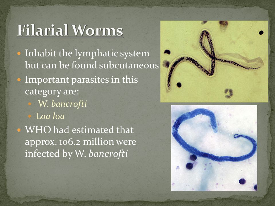 Inhabit the lymphatic system but can be found subcutaneous Important parasites in this category are: W.
