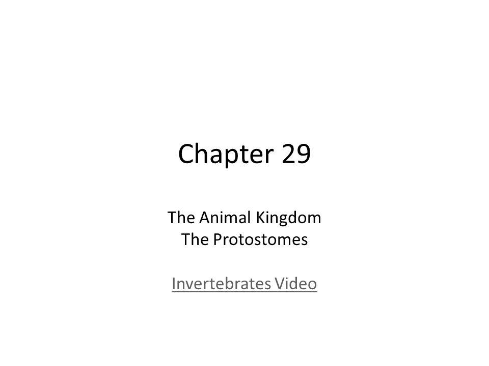 Chapter 29 The Animal Kingdom The Protostomes Invertebrates Video