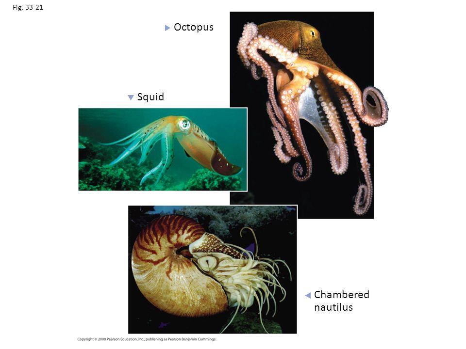 Fig. 33-21 Octopus Squid Chambered nautilus
