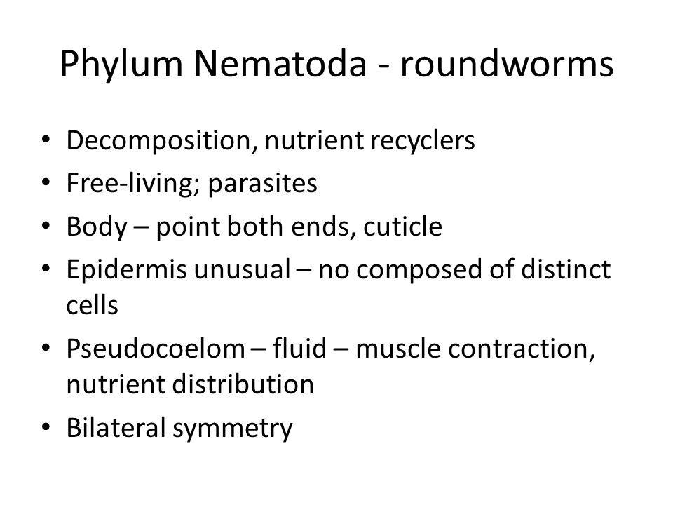 Phylum Nematoda - roundworms Decomposition, nutrient recyclers Free-living; parasites Body – point both ends, cuticle Epidermis unusual – no composed