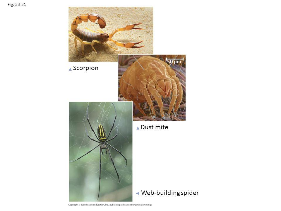 Fig. 33-31 Scorpion Dust mite Web-building spider 50 µm