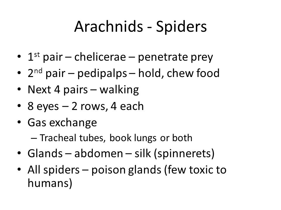 Arachnids - Spiders 1 st pair – chelicerae – penetrate prey 2 nd pair – pedipalps – hold, chew food Next 4 pairs – walking 8 eyes – 2 rows, 4 each Gas