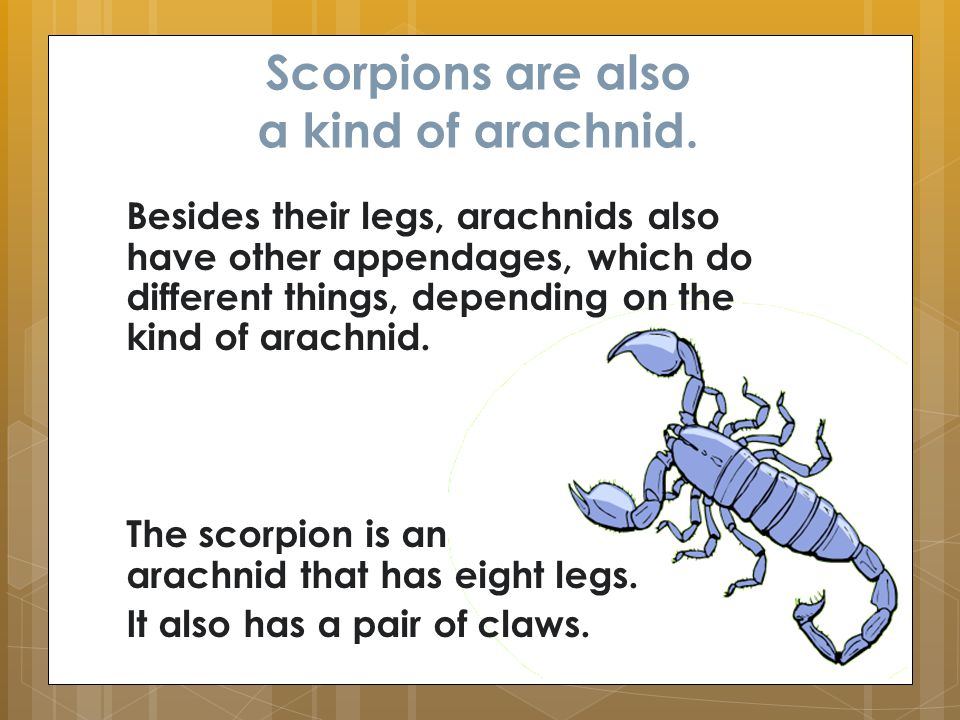 Scorpions are also a kind of arachnid. Besides their legs, arachnids also have other appendages, which do different things, depending on the kind of a