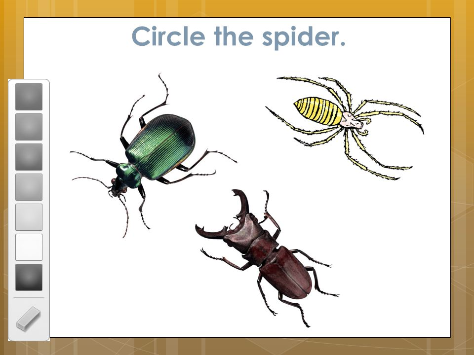 Circle the spider.