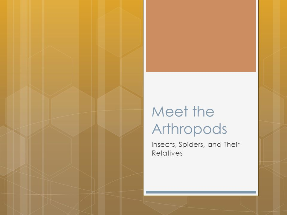 Meet the Arthropods Insects, Spiders, and Their Relatives