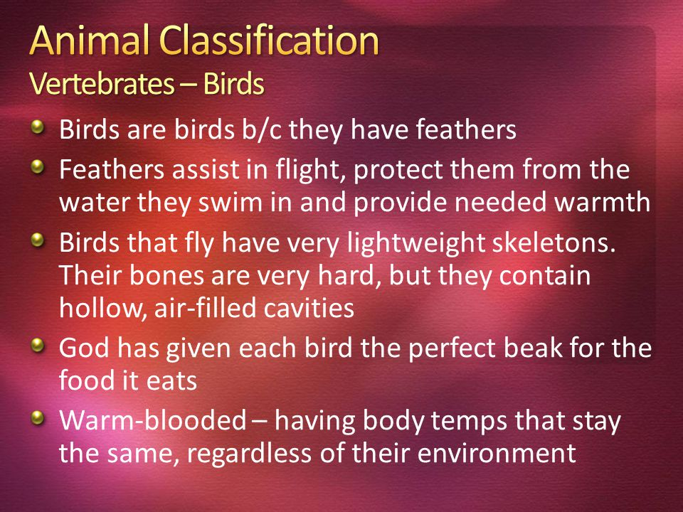 Birds are birds b/c they have feathers Feathers assist in flight, protect them from the water they swim in and provide needed warmth Birds that fly have very lightweight skeletons.