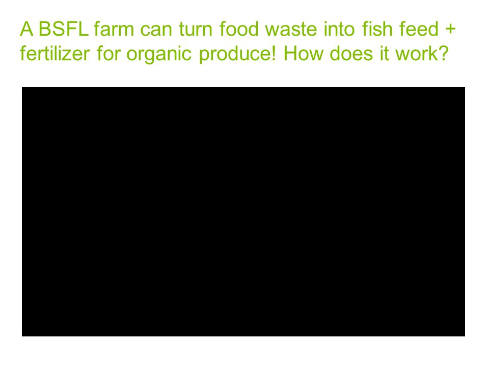 A BSFL farm can turn food waste into fish feed + fertilizer for organic produce! How does it work