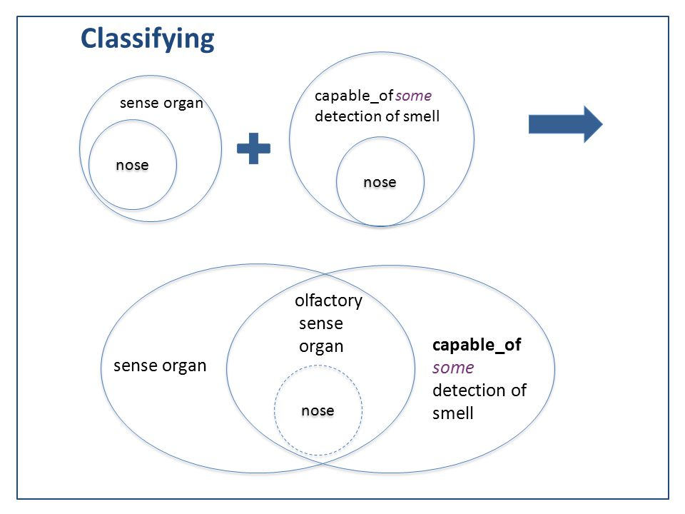 nose sense organ nose capable_of some detection of smell Classifying sense organ capable_of some detection of smell olfactory sense organ nose