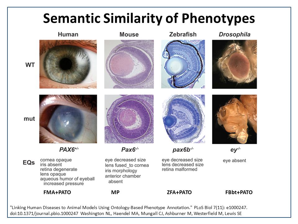 Semantic Similarity of Phenotypes Linking Human Diseases to Animal Models Using Ontology-Based Phenotype Annotation. PLoS Biol 7(11): e1000247.