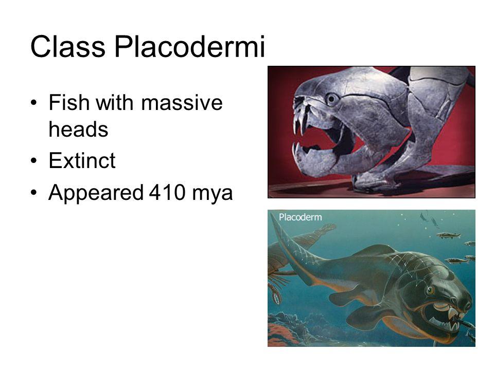 Class Chondricthyes Cartilage fish (bone in teeth & scales) Sharks, skates, rays, ratfish & chimeras Appeared 400 mya