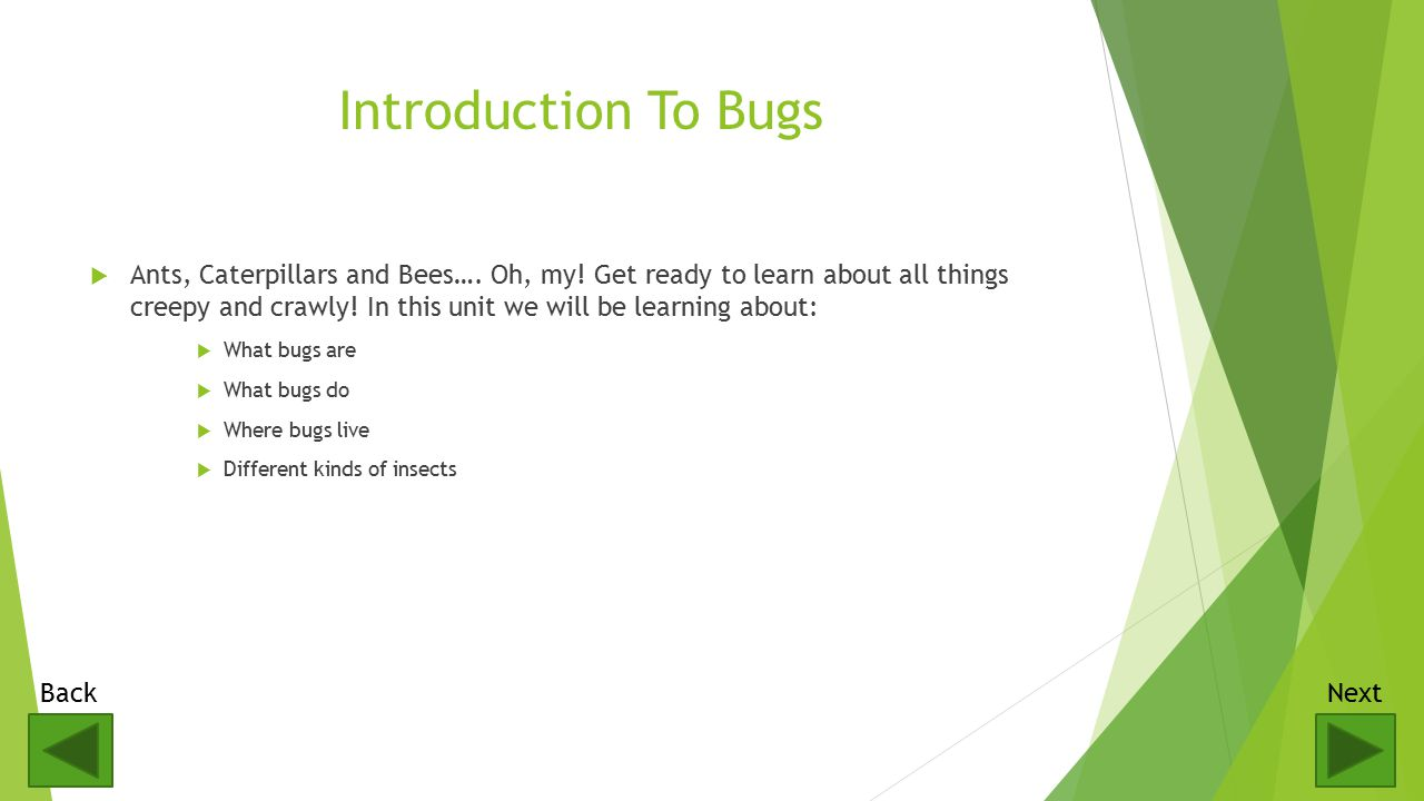 Introduction To Bugs  Ants, Caterpillars and Bees….
