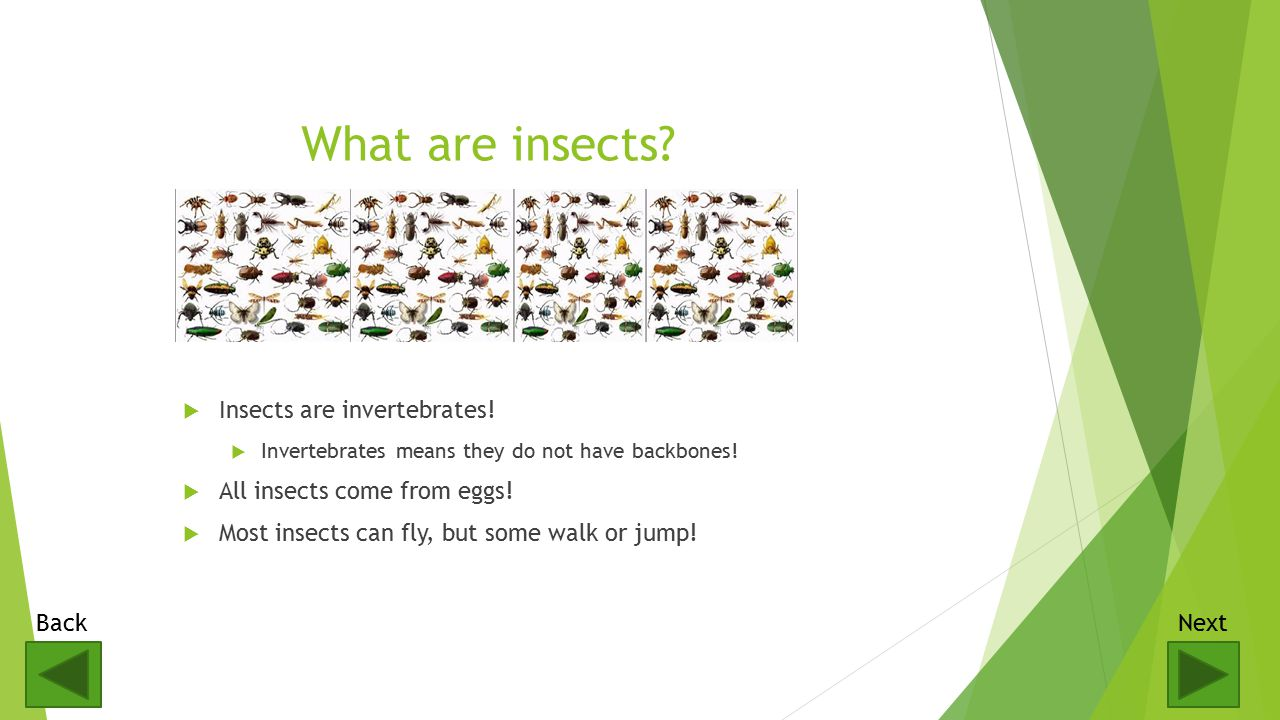 Basic Insect Vocabulary  Nectar- a sweet fluid given off by plants that bees use to make honey.