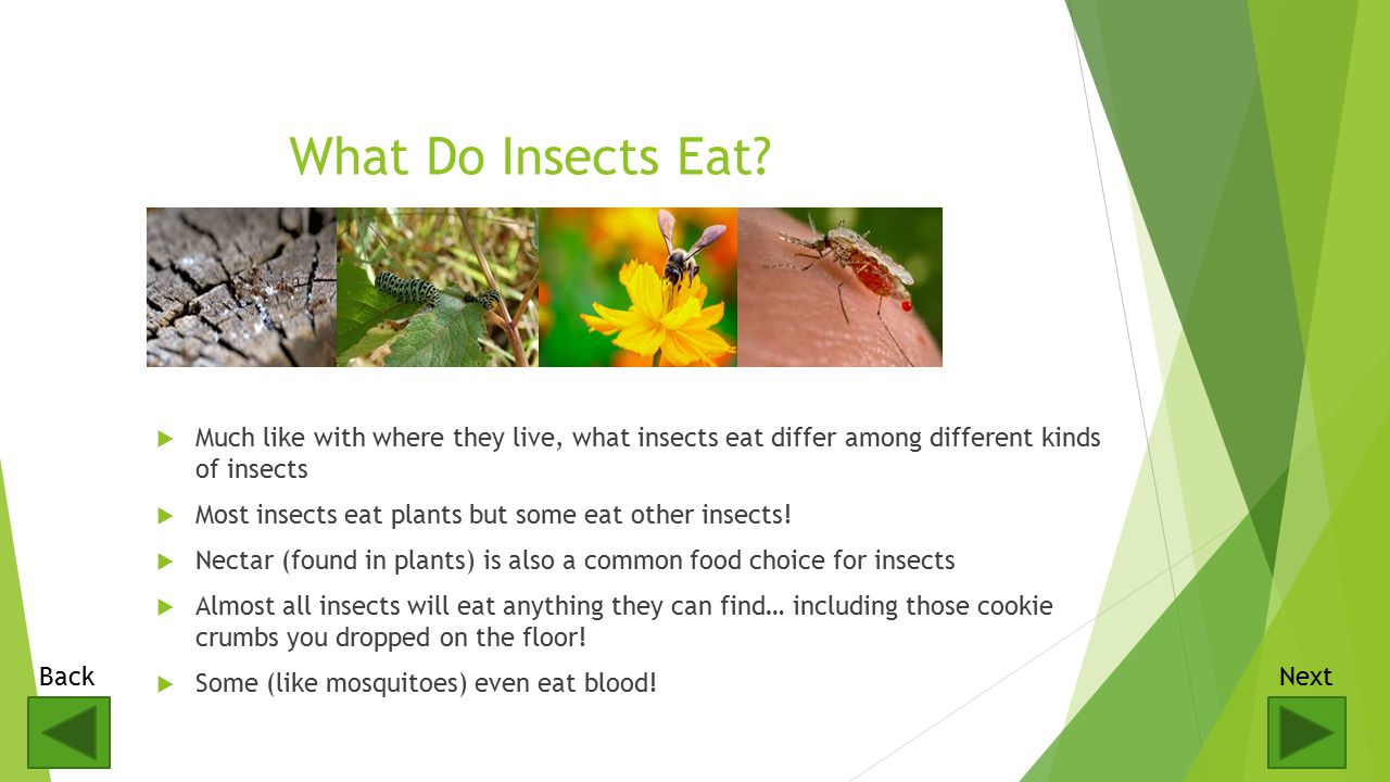  There are over a million different kinds of insects.