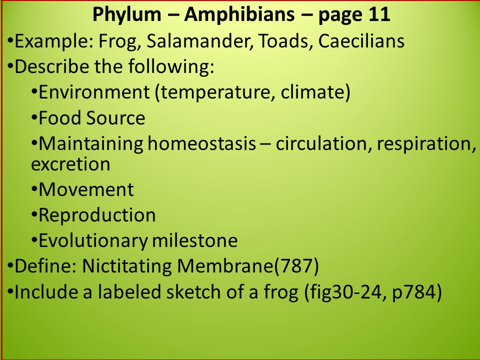 Phylum – Amphibians – page 11 Example: Frog, Salamander, Toads, Caecilians Describe the following: Environment (temperature, climate) Food Source Main
