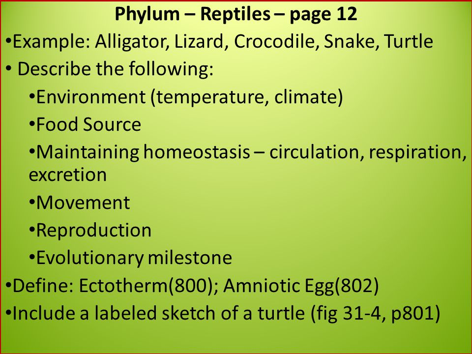 Phylum – Reptiles – page 12 Example: Alligator, Lizard, Crocodile, Snake, Turtle Describe the following: Environment (temperature, climate) Food Sourc