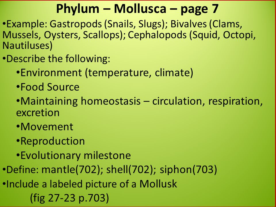 Phylum – Mollusca – page 7 Example: Gastropods (Snails, Slugs); Bivalves (Clams, Mussels, Oysters, Scallops); Cephalopods (Squid, Octopi, Nautiluses)