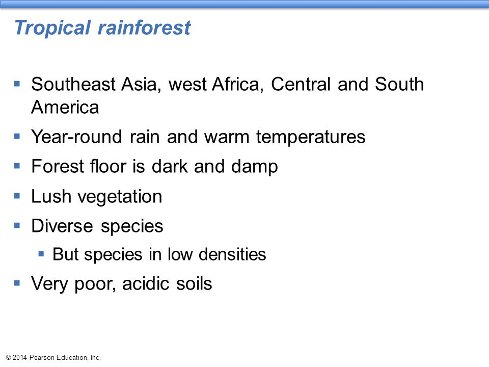 Tropical rainforest  Southeast Asia, west Africa, Central and South America  Year-round rain and warm temperatures  Forest floor is dark and damp 