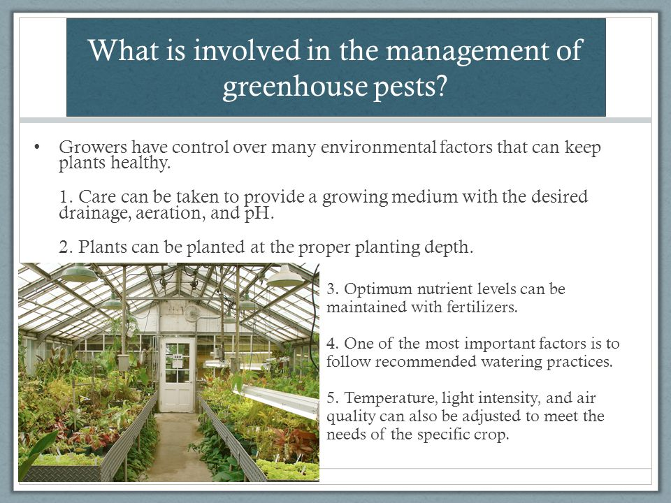 What is involved in the management of greenhouse pests? Growers have control over many environmental factors that can keep plants healthy. 1. Care can