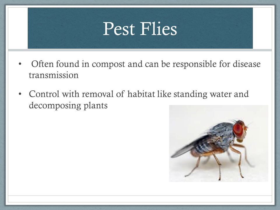 Pest Flies Often found in compost and can be responsible for disease transmission Control with removal of habitat like standing water and decomposing