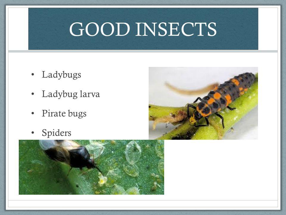GOOD INSECTS Ladybugs Ladybug larva Pirate bugs Spiders