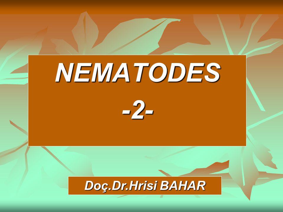 NEMATODES-2- Doç.Dr.Hrisi BAHAR