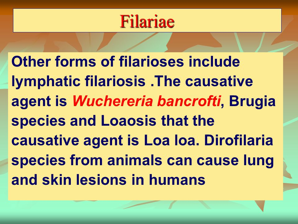 Filariae Other forms of filarioses include lymphatic filariosis.The causative agent is Wuchereria bancrofti, Brugia species and Loaosis that the causa