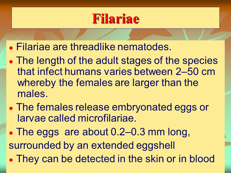 Filariae ● Filariae are threadlike nematodes. ● The length of the adult stages of the species that infect humans varies between 2–50 cm whereby the fe