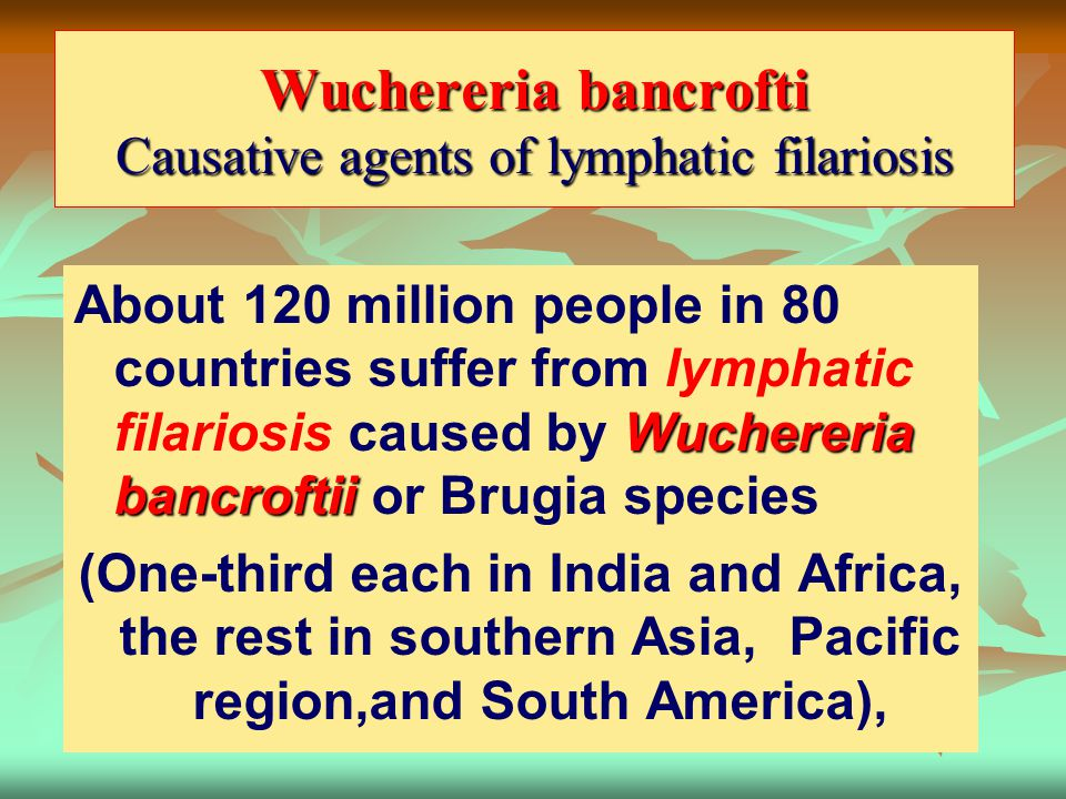Wuchereria bancrofti Causative agents of lymphatic filariosis Wuchereria bancroftii About 120 million people in 80 countries suffer from lymphatic fil