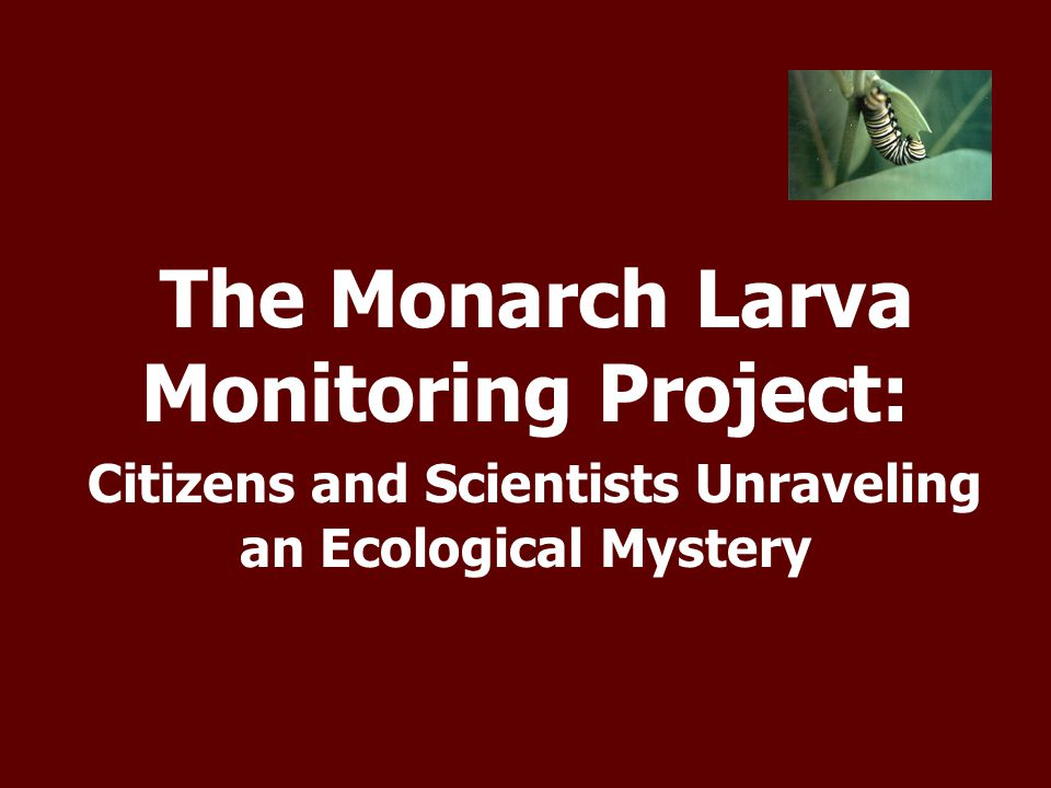 The Monarch Larva Monitoring Project: Citizens and Scientists Unraveling an Ecological Mystery