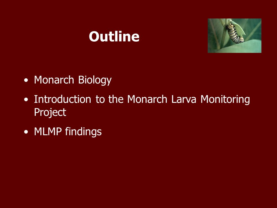Outline Monarch Biology Introduction to the Monarch Larva Monitoring Project MLMP findings