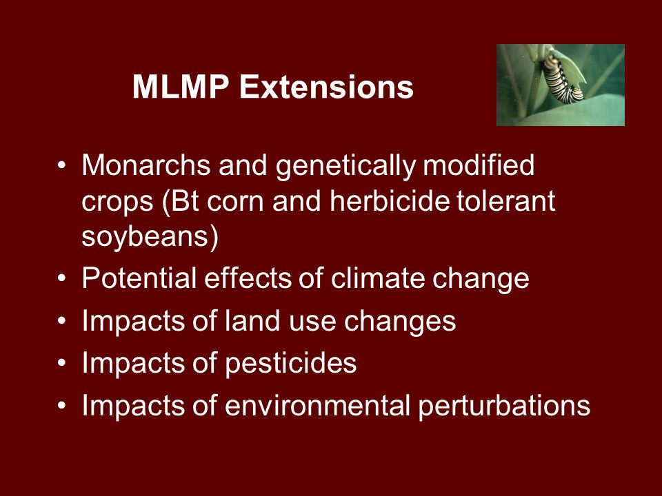 MLMP Extensions Monarchs and genetically modified crops (Bt corn and herbicide tolerant soybeans) Potential effects of climate change Impacts of land use changes Impacts of pesticides Impacts of environmental perturbations