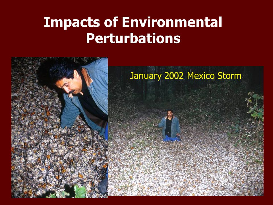Impacts of Environmental Perturbations January 2002 Mexico Storm