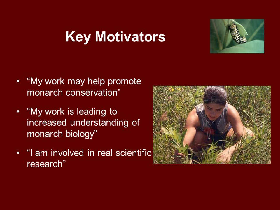 Key Motivators My work may help promote monarch conservation My work is leading to increased understanding of monarch biology I am involved in real scientific research