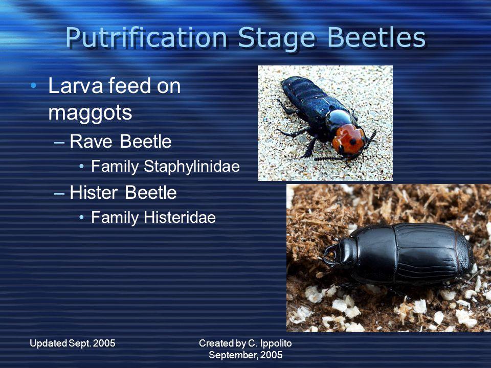 Updated Sept. 2005Created by C. Ippolito September, 2005 Beetles Beetles Order Colleoptera –C–Complete Metamorphosis Egg  Larva (grub)  Pupa  Adult