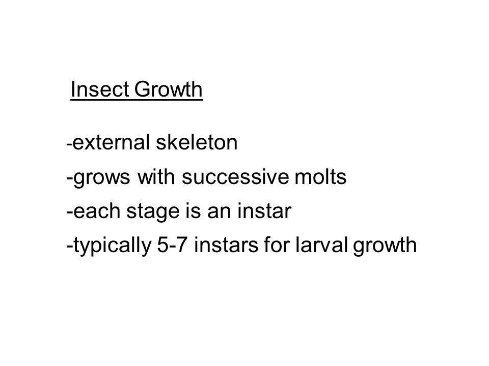 Insect Growth - external skeleton -grows with successive molts -each stage is an instar -typically 5-7 instars for larval growth