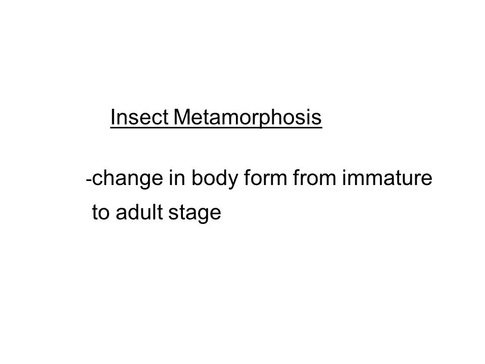 Insect Metamorphosis - change in body form from immature to adult stage
