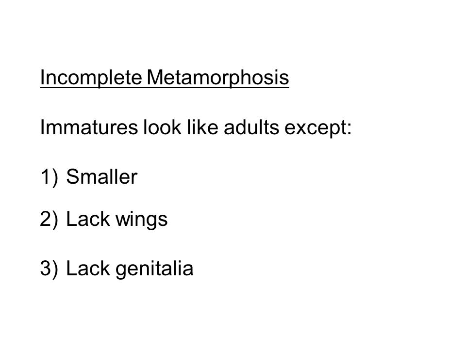 Incomplete Metamorphosis Immatures look like adults except: 1)Smaller 2)Lack wings 3)Lack genitalia