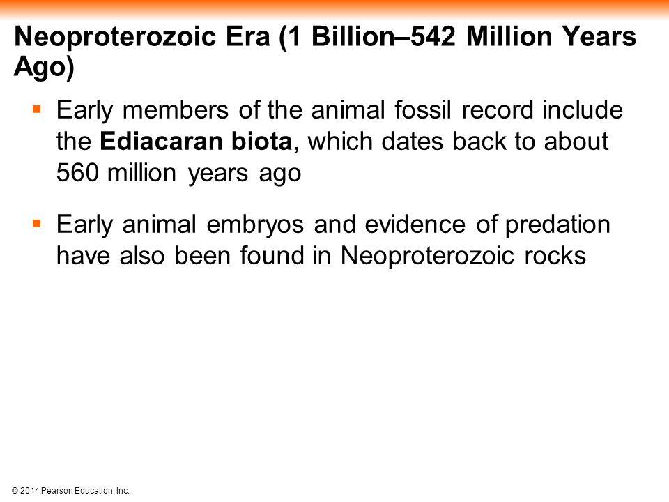 © 2014 Pearson Education, Inc. Neoproterozoic Era (1 Billion–542 Million Years Ago)  Early members of the animal fossil record include the Ediacaran