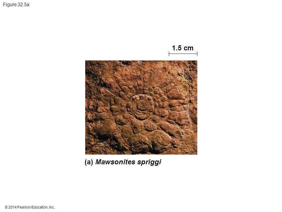 © 2014 Pearson Education, Inc. Figure 32.5a 1.5 cm (a) Mawsonites spriggi